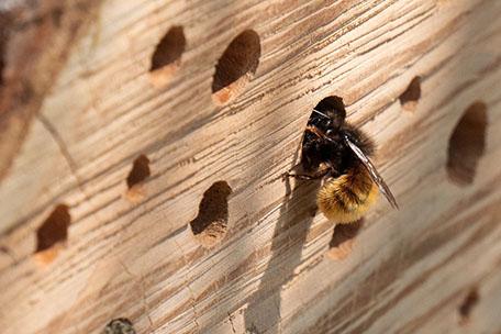 kachel-air-bee-and-bee