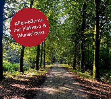 201118_allee-baum_quadrat_576x510