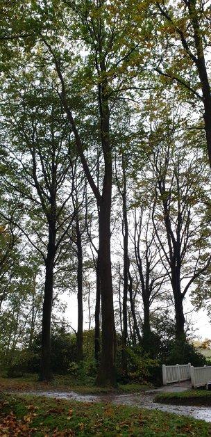 "Baum Nr. 248 ""Esskastanie"""