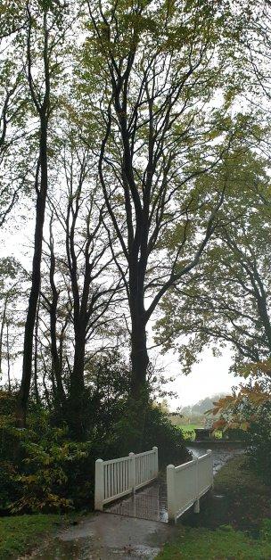"""Baum Nr. 249 """"Buche"""""""